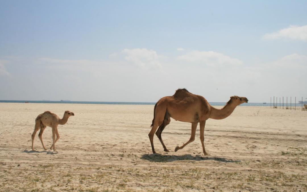 Listy z podróży do Omanu cz. 2