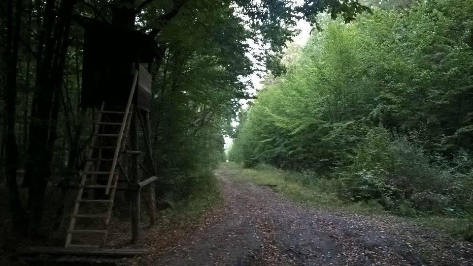 """Wycieczka biegowa """"Piknik majowy jesienna reedycja"""" we Wiączyniu Dolnym"""